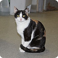 Domestic Shorthair Cat for adoption in New Rochelle Humane, New York - Creepy