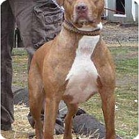 Adopt A Pet :: Angie - Jackson, NJ