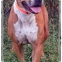 Adopt A Pet :: Belle - Eustis, FL