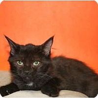 Adopt A Pet :: MIRANDA - SILVER SPRING, MD