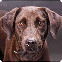 Adopt A Pet :: mocha - Pembroke pInes, FL