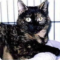 Adopt A Pet :: Coco - Medway, MA