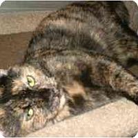 Adopt A Pet :: Schotzy - Milwaukee, WI