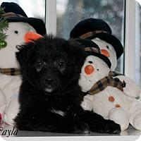 Adopt A Pet :: Layla - Caledon, ON