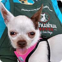 Adopt A Pet :: Rhea - San Diego, CA