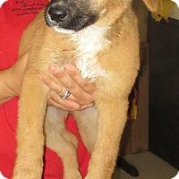 Adopt A Pet :: DREW - Phoenix, AZ