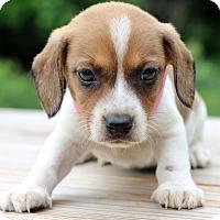 Adopt A Pet :: Heaven - Waldorf, MD