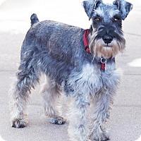 Adopt A Pet :: Smoke - San Diego, CA