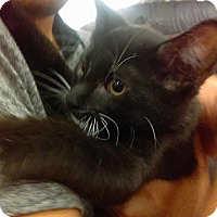 Adopt A Pet :: Apollo - Lancaster, CA