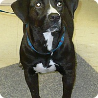 Adopt A Pet :: Darlene - Eastpoint, FL