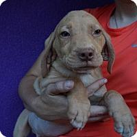 Adopt A Pet :: Dallas - Oviedo, FL