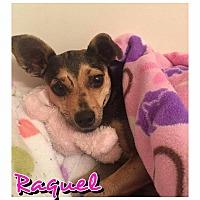 Adopt A Pet :: Raquel - Charlotte, NC