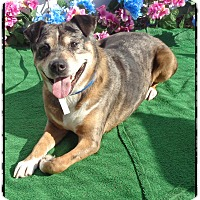 Adopt A Pet :: BEAU - Marietta, GA