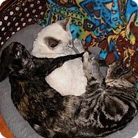 Adopt A Pet :: Stella - Jerseyville, IL