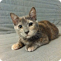 Adopt A Pet :: Remy - Alameda, CA