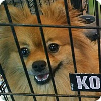 Adopt A Pet :: Ginger - Pembroke, GA