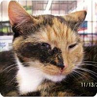 Adopt A Pet :: Laurel (& Lindsey) - Riverside, RI