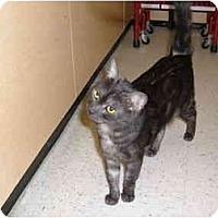 Adopt A Pet :: APOLLO - No.Charleston, SC
