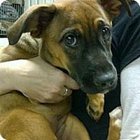 Adopt A Pet :: Gracie - Cleveland, OH