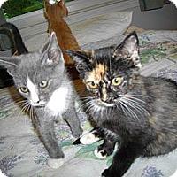 Adopt A Pet :: Demi - Harrisburg, NC