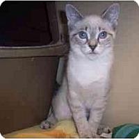 Adopt A Pet :: Karma - Easley, SC