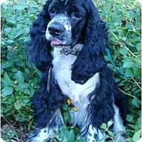 Adopt A Pet :: Sammie - Sugarland, TX