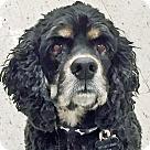Adopt A Pet :: Siler
