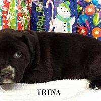 Adopt A Pet :: Trina - Kimberton, PA