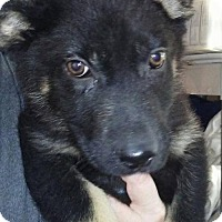 Adopt A Pet :: Dante (Local) - Brighton, TN