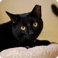 Adopt A Pet :: Dash - Kettering, OH