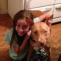 Mexican Hairless/American Pit Bull Terrier Mix Dog for adoption in Santa Cruz, California - Minnie