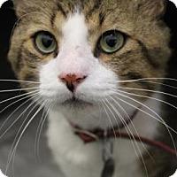 Adopt A Pet :: Kenny - Bradenton, FL