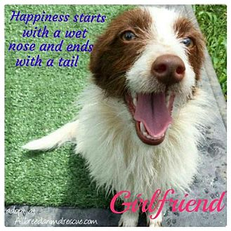 Terrier (Unknown Type, Medium)/Terrier (Unknown Type, Medium) Mix Dog for adoption in Cary, North Carolina - Girlfriend