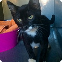 Adopt A Pet :: Chewy (in CT) - Manchester, CT