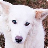 Adopt A Pet :: SNOWBALL(LEFT BEHIND-SO SAD!! - Wakefield, RI
