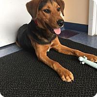 Adopt A Pet :: Ozzie - NEEDS FOSTER! - Washington, DC