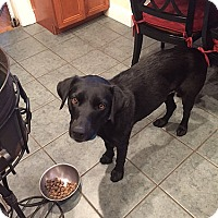 Adopt A Pet :: Buckeye - Fairfax, VA