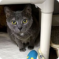 Adopt A Pet :: Winking Willow - Chicago, IL