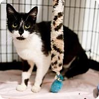 Adopt A Pet :: Madeline - Belleville, MI