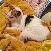 Adopt A Pet :: Mary Kate - Harvey, LA