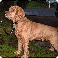 Adopt A Pet :: Sheridan - Tacoma, WA