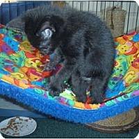 Adopt A Pet :: Baker - Manalapan, NJ