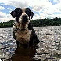 Adopt A Pet :: Roy - Richmond, VA
