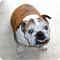 Adopt A Pet :: Lizzie-Adoption Pending - San Diego, CA