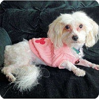 Adopt A Pet :: Maisie - Mooy, AL