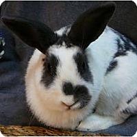 Adopt A Pet :: Whinney - Newport, DE