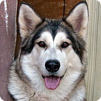 Adopt A Pet :: SILVER-Adoption Pending - Boise, ID