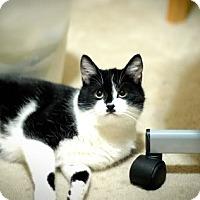 Adopt A Pet :: KAYCEE - Cypress, CA