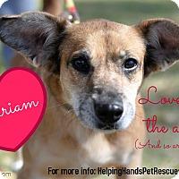 Adopt A Pet :: Miriam - Gainesville, FL