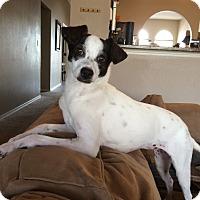 Adopt A Pet :: Nova In El Paso - San Antonio, TX